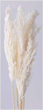 Feather pampas white
