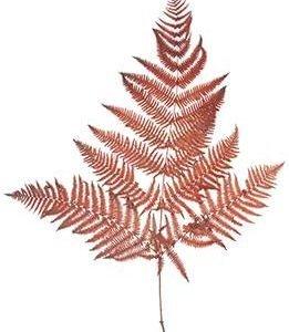 Fern preserved red