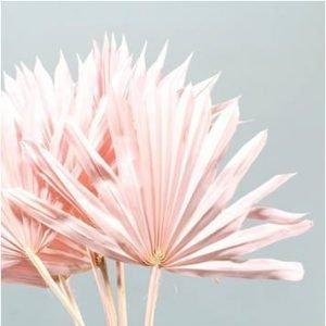 Large Sun Leaf Palm Light pink