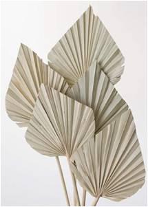 Mini spear palm natural