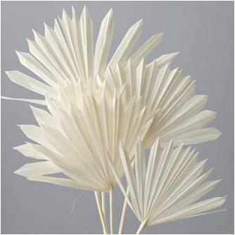 Mini sun leaf palm white