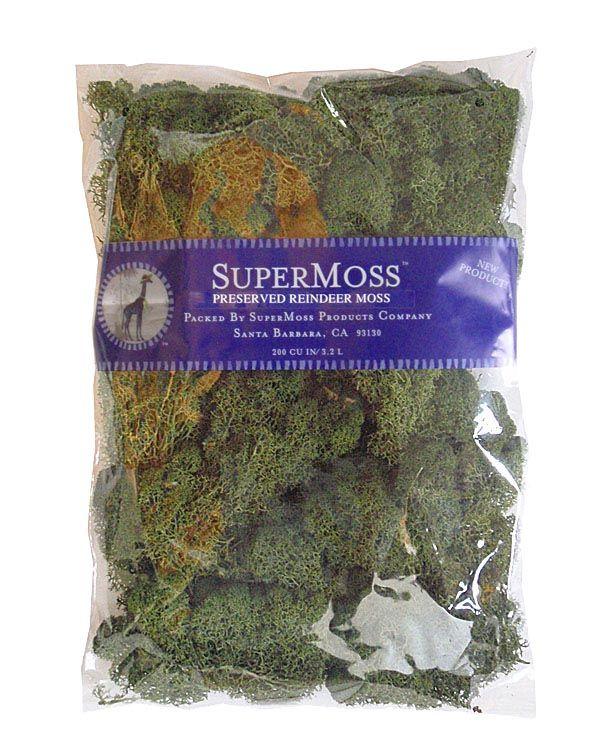 Reindeer Moss Green