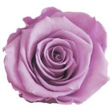 Violet pink preserved rose