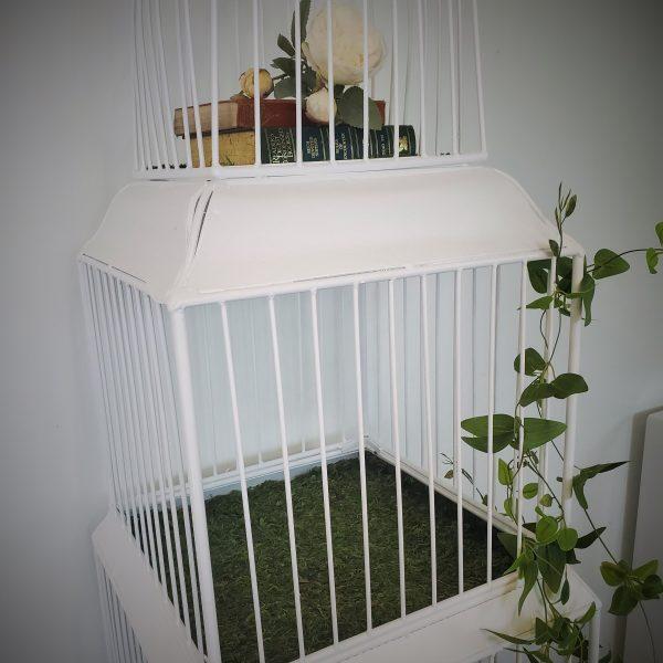 Bird cage 2 scaled